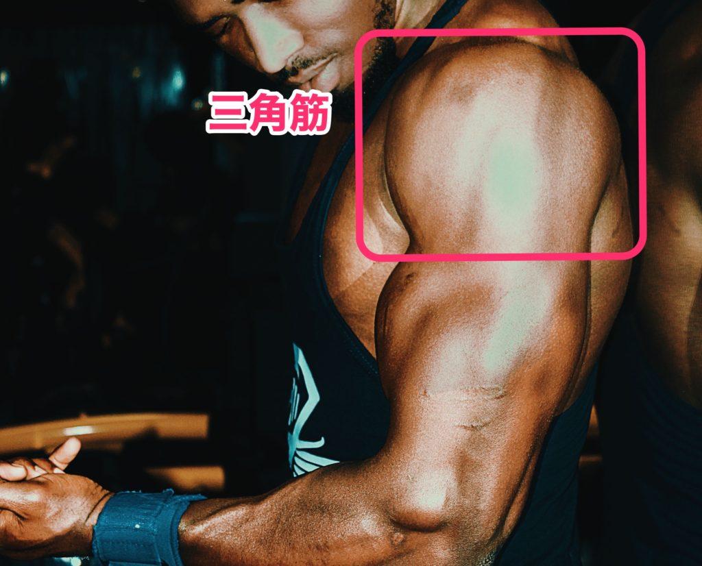低身長男子が鍛えるべき筋肉部位の画像